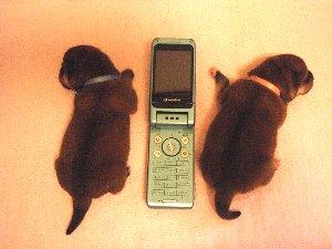 携帯サイズ~?なんじゃそりゃ…(-з-)