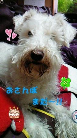 画像001バニラ1