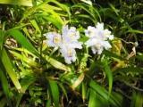 画像 248花