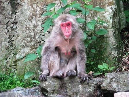 画像 296猿