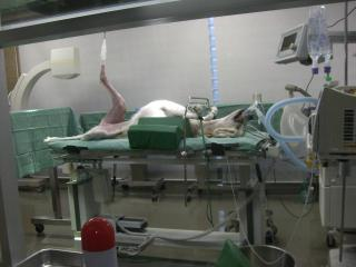 手術台の上のサル