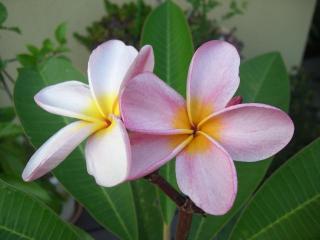 可愛い花が