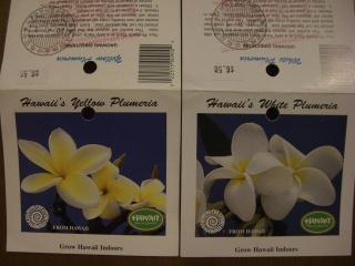検疫のスタンプ  黄色と白の花