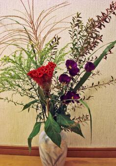 2008 09 17秋の花