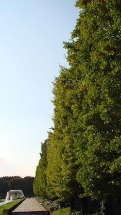 昭和記念公園銀杏並木1