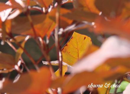 我が家の秋色。。