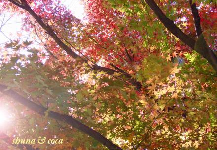 紅葉~。。