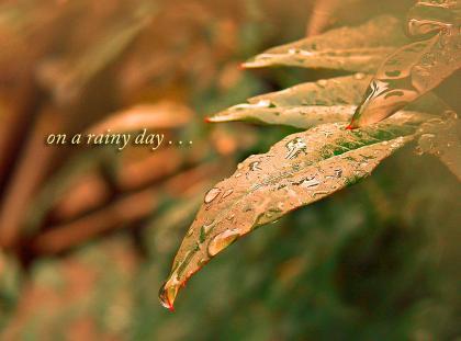雨の一日・・・