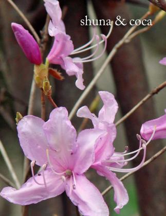 綺麗に咲いて~。。