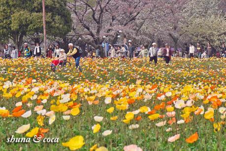 可愛いお花畑~!