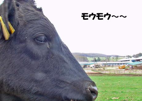 牧場・・・のコピー