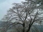 ハウスクリーニング桜2