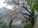 ハウスクリーニング桜7