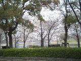 ハウスクリーニング景色(桜)