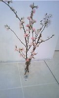家事代行桜1