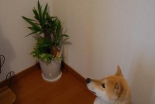 観葉植物っておいしい?