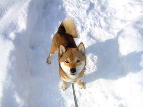 雪とお日様でまぶしい~