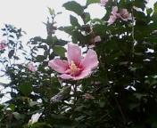 私、綺麗に咲けてる?