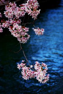 琵琶湖疎水で。。。