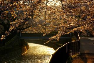 日の出直後の琵琶湖疏水。。。