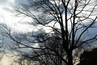 絡み合った枝の影