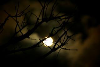 月夜に・・・