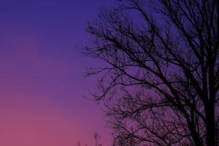 空の色と木の影と・・・
