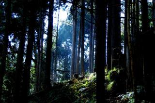 木々を抜けてくる光