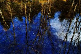 水面に映る木立