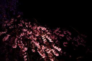 闇に伸びる枝を。。。