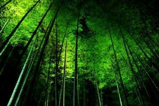 そして竹林もある。。。