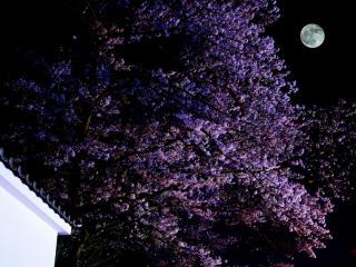 夢宵桜の空
