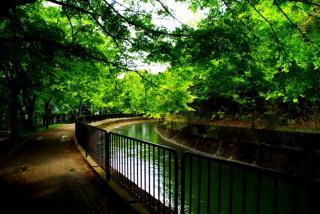 新緑の中を・・・