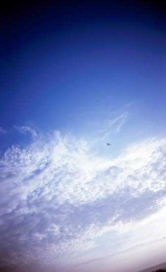 大雲トンビ