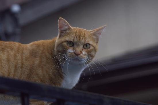 見下ろし猫
