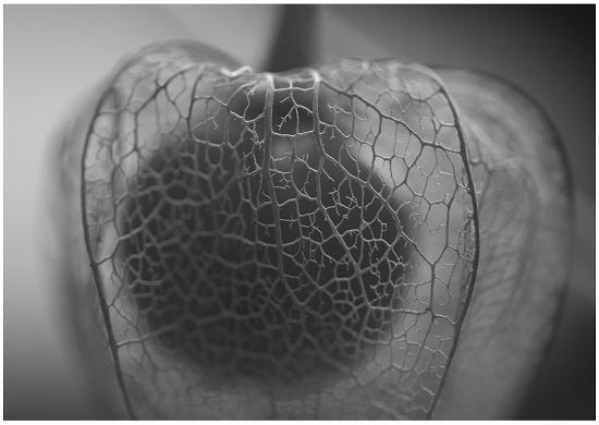 ホオズキの網