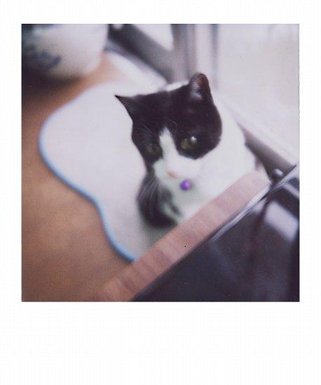 猫かぶり1