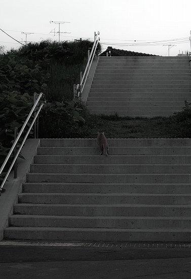 階段登る_SDIM0804