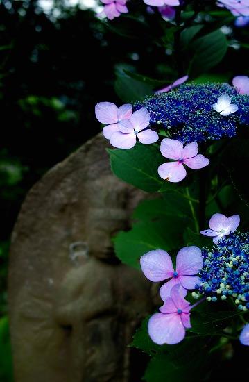 菩薩と紫陽花_SDIM1469