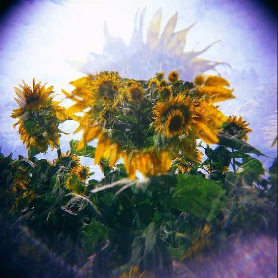 向日葵群像_EPSON053
