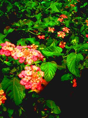 夜道に咲く花