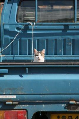 鈴木さんちの猫