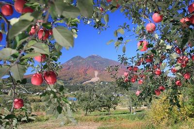 りんご畑からの岩木山
