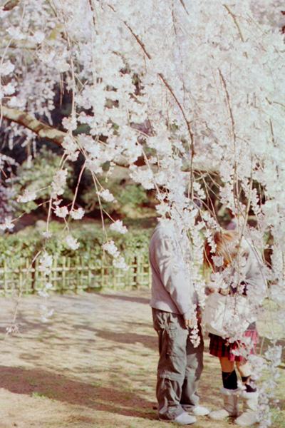 櫻の木の満開の下で。