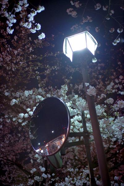 夜桜/木屋町