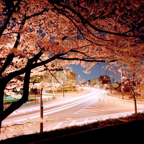 妖艶夜桜景/蹴上