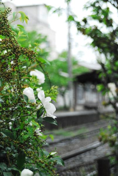 雨天/嵐電北野線・龍安寺付近