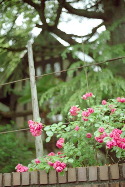 薔薇/大丸ヴィラ