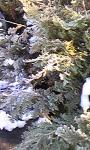 20090129194538