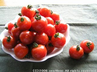 snufdays tomato1